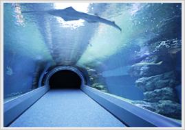 p_dolphin_pool
